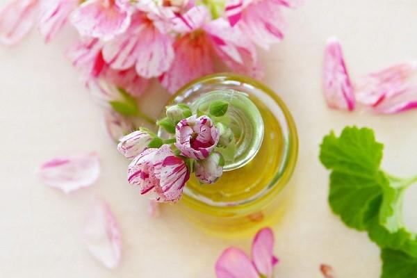 Geranium Oil, Sensasi Keharuman Bunga Geranium