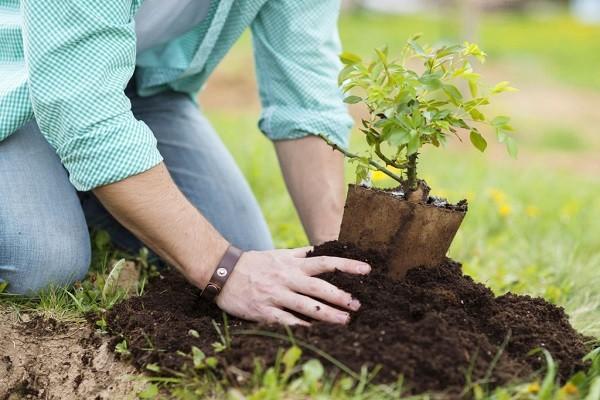 3. Yuk, Tanam dan Jaga Pohon untuk Bantu Kurangi Polusi Udara!