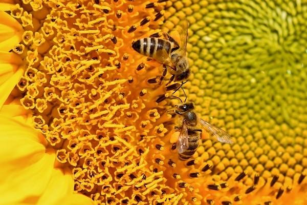 Madu Bukan Berasal Dari Lebah Madu